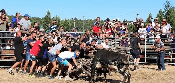 Malcata – Também há touros em Terras do Lince!